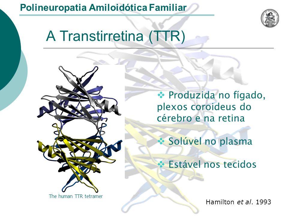 A Transtirretina (TTR)