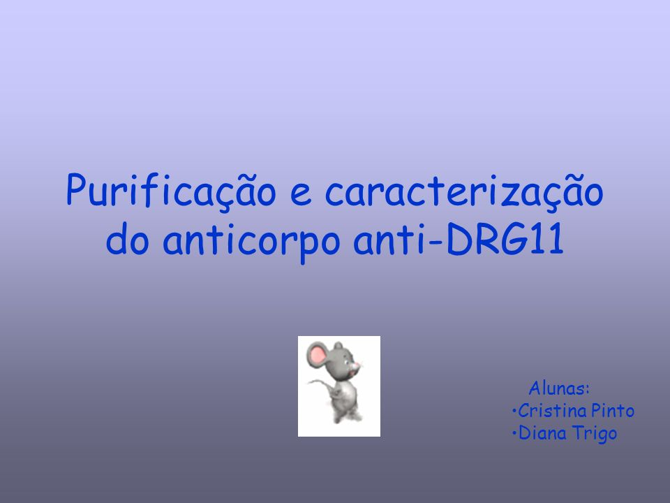Purificação e caracterização do anticorpo anti-DRG11