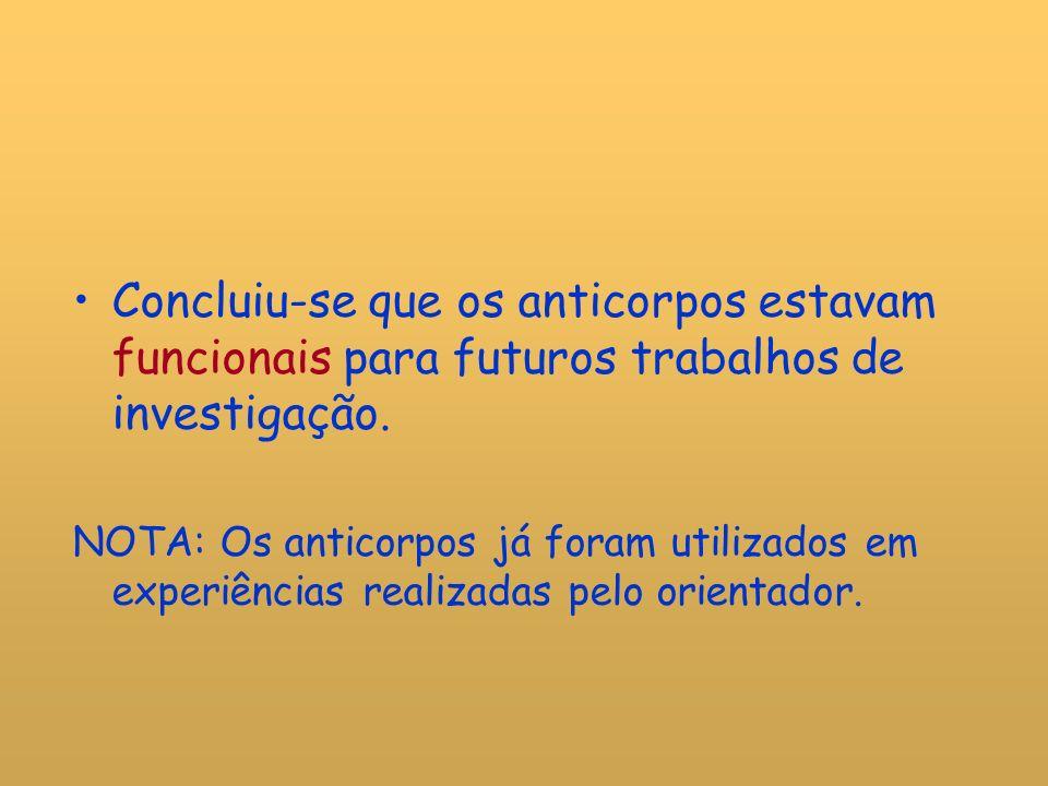 Concluiu-se que os anticorpos estavam funcionais para futuros trabalhos de investigação.