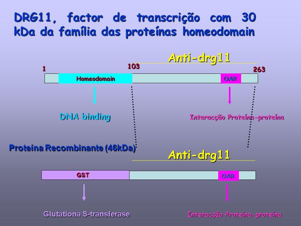 Glutationa S-transferase