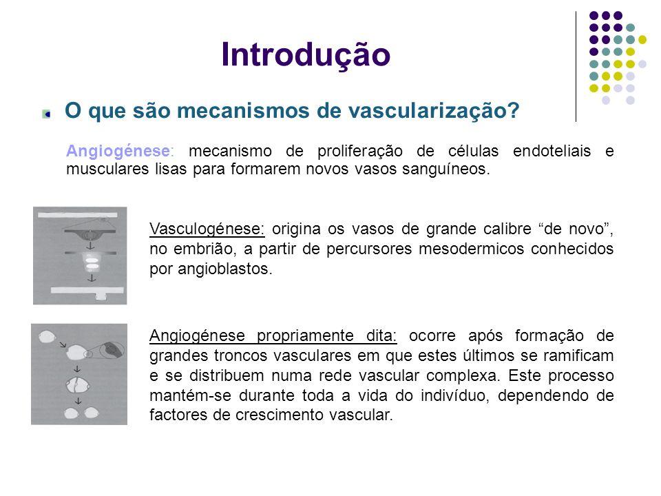 Introdução O que são mecanismos de vascularização