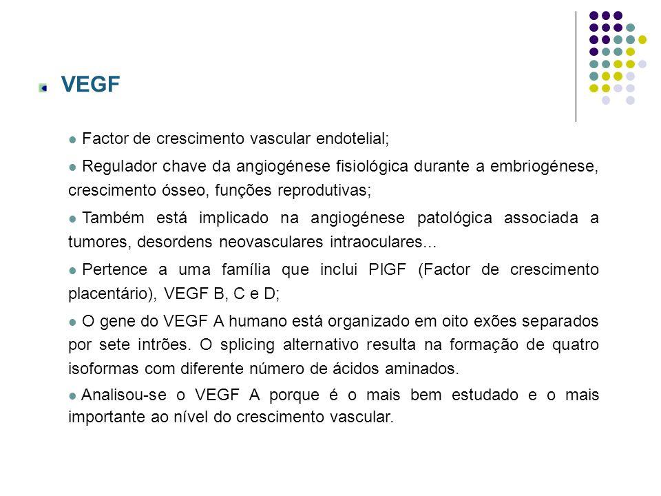 VEGF Factor de crescimento vascular endotelial;