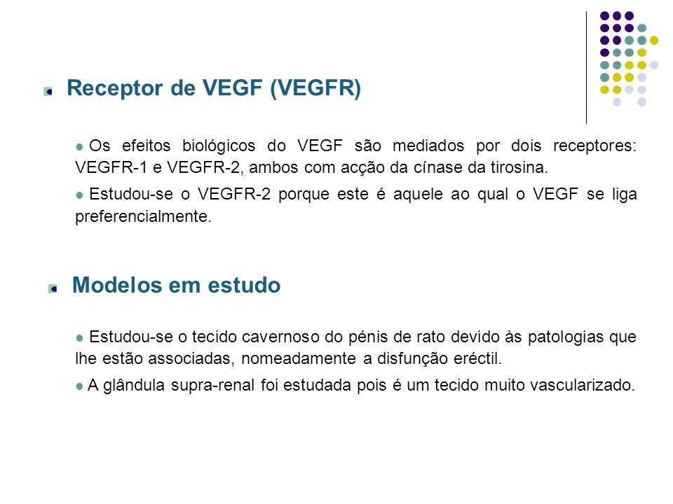 Receptor de VEGF (VEGFR)