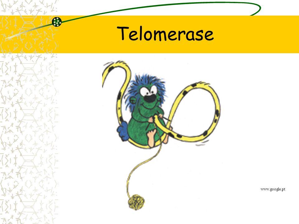 Telomerase www.google.pt