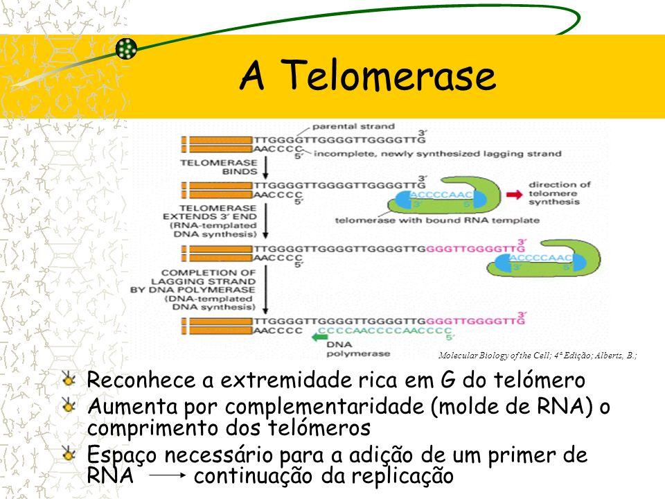A Telomerase Reconhece a extremidade rica em G do telómero