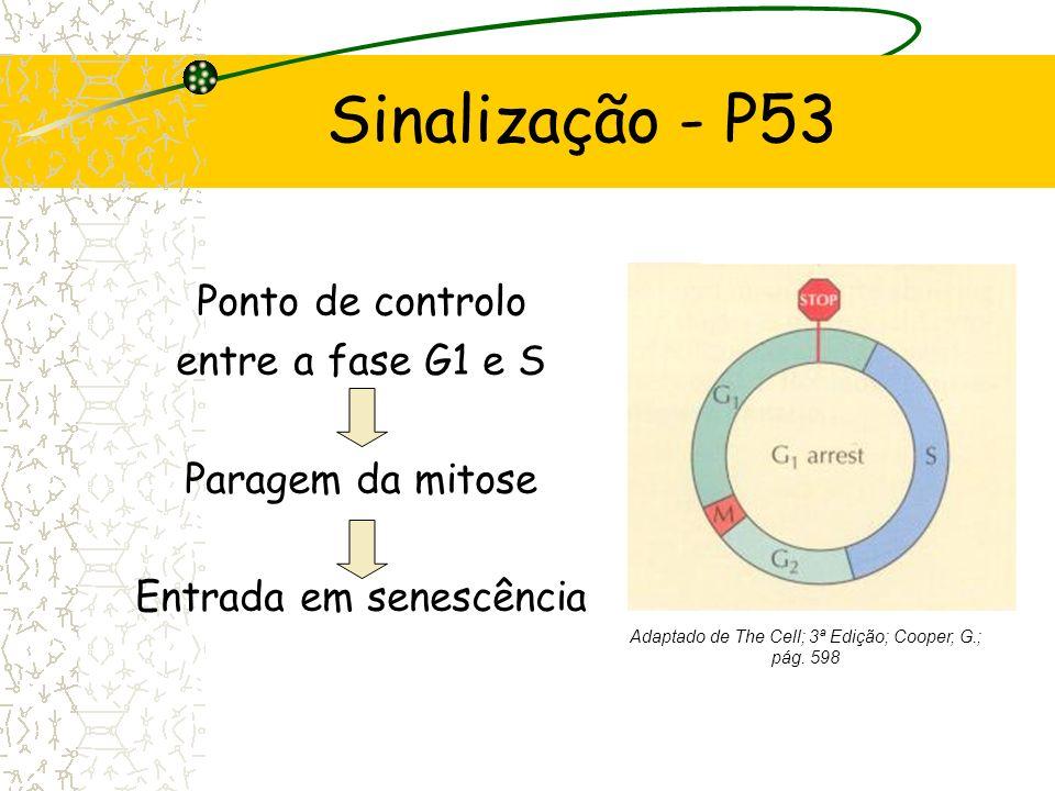 Sinalização - P53 Ponto de controlo entre a fase G1 e S