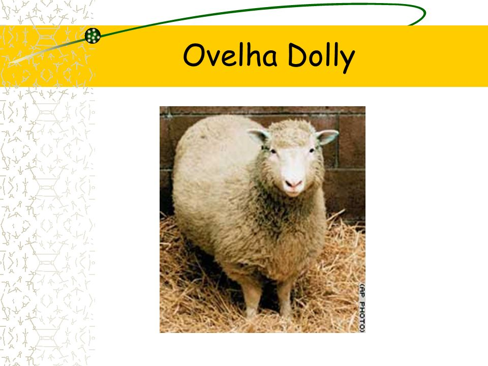 Ovelha Dolly