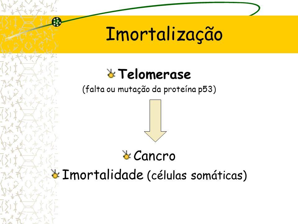 Imortalização Telomerase Cancro Imortalidade (células somáticas)