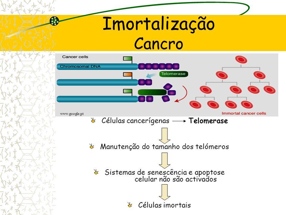Imortalização Cancro Células cancerígenas Telomerase