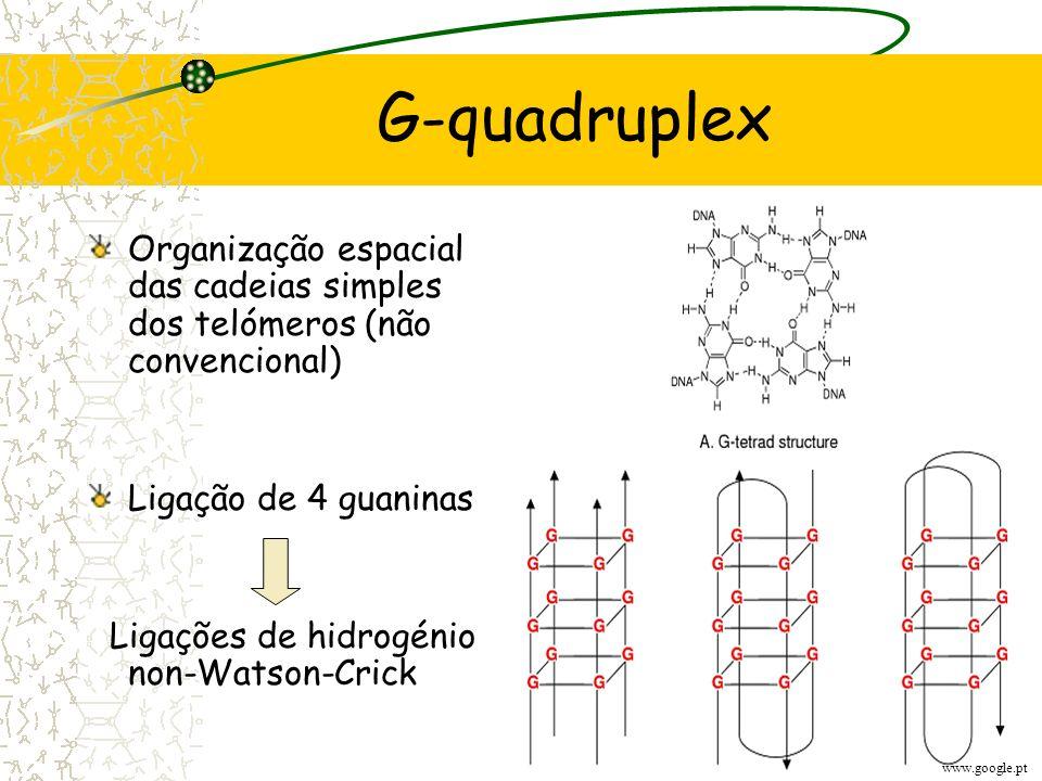 G-quadruplex Organização espacial das cadeias simples dos telómeros (não convencional) Ligação de 4 guaninas.