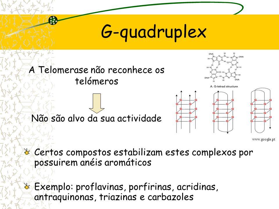 G-quadruplex A Telomerase não reconhece os telómeros