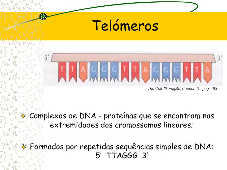 Telómeros The Cell; 3ª Edição; Cooper, G.; pág. 193. Complexos de DNA - proteínas que se encontram nas extremidades dos cromossomas lineares;
