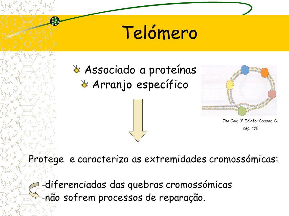 Telómero Associado a proteínas Arranjo específico