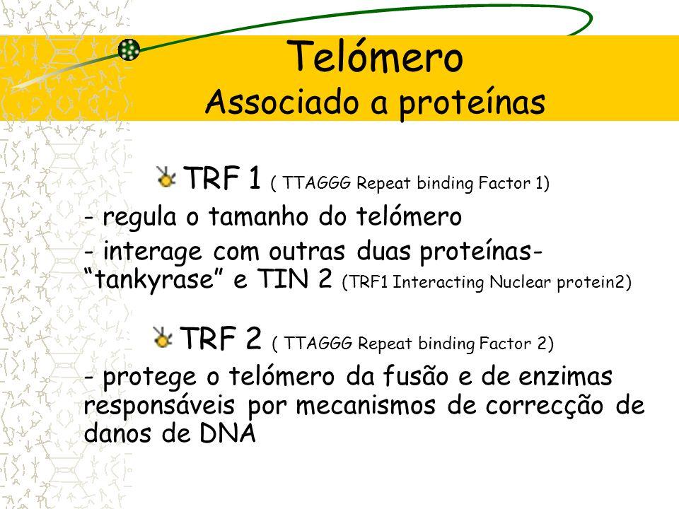 Telómero Associado a proteínas