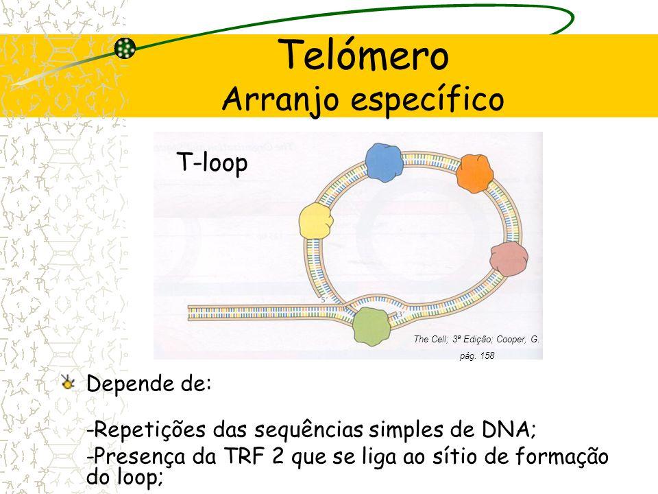 Telómero Arranjo específico