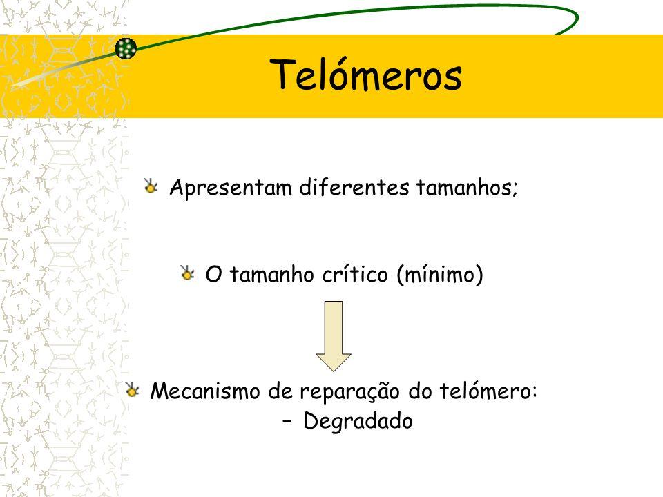 Telómeros Apresentam diferentes tamanhos; O tamanho crítico (mínimo)