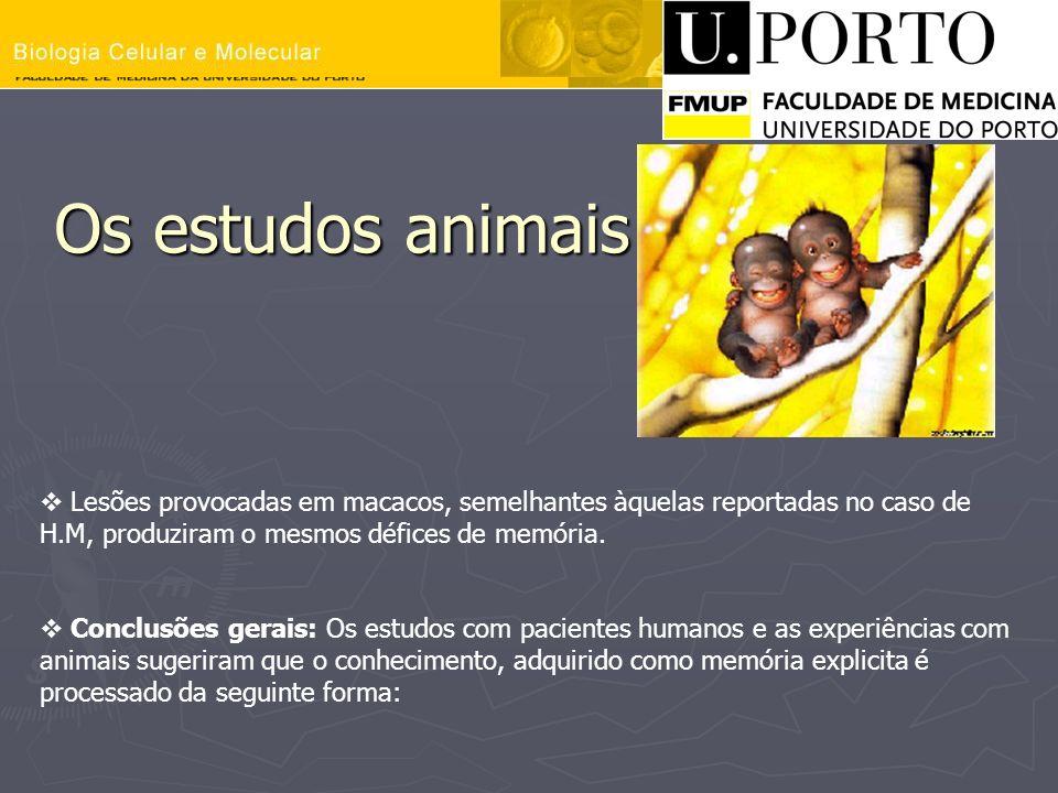 Os estudos animais Lesões provocadas em macacos, semelhantes àquelas reportadas no caso de H.M, produziram o mesmos défices de memória.