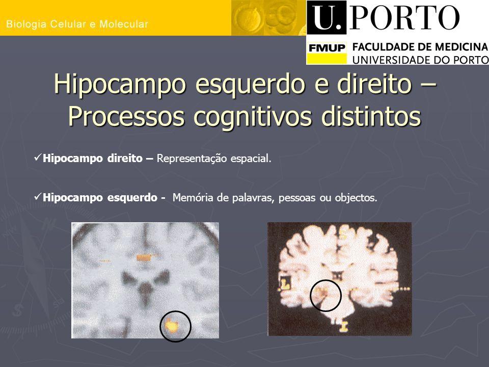 Hipocampo esquerdo e direito – Processos cognitivos distintos