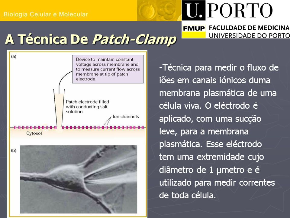 A Técnica De Patch-Clamp