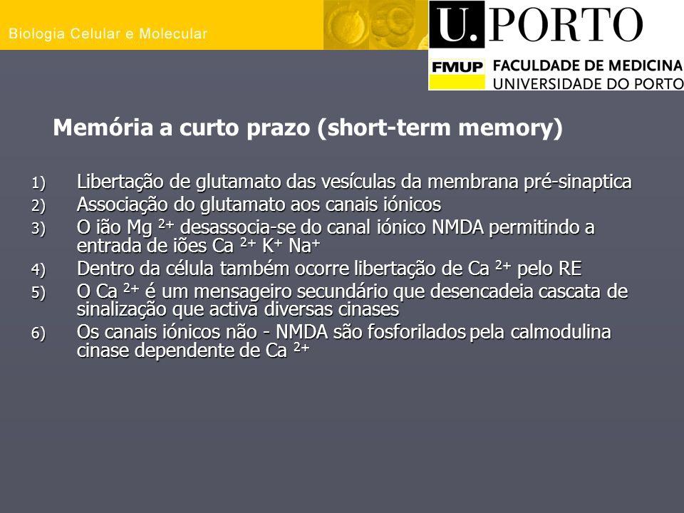 Memória a curto prazo (short-term memory)