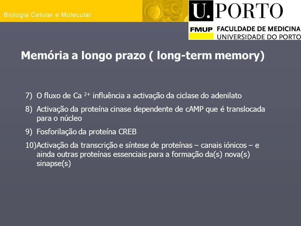 Memória a longo prazo ( long-term memory)
