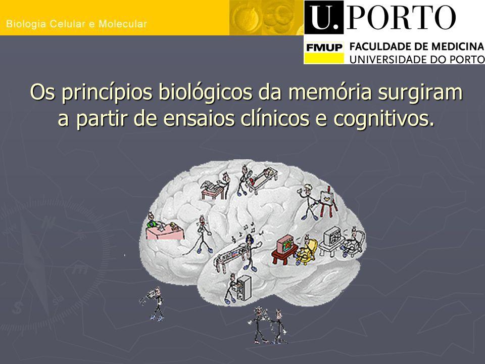 Os princípios biológicos da memória surgiram a partir de ensaios clínicos e cognitivos.