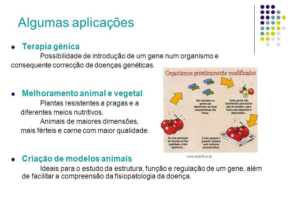 Algumas aplicações Terapia génica Melhoramento animal e vegetal