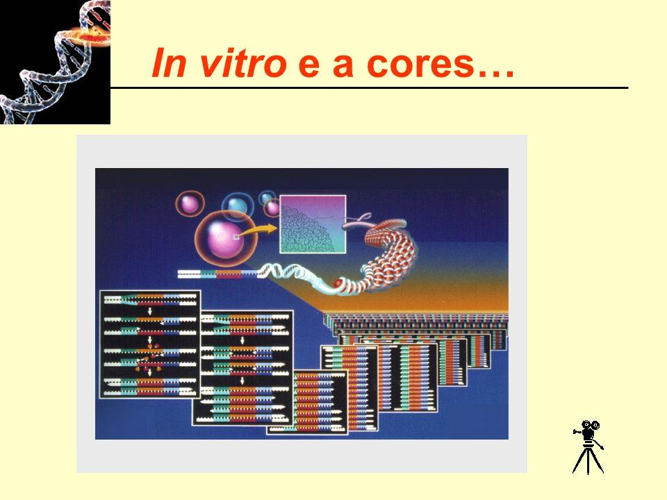 In vitro e a cores…
