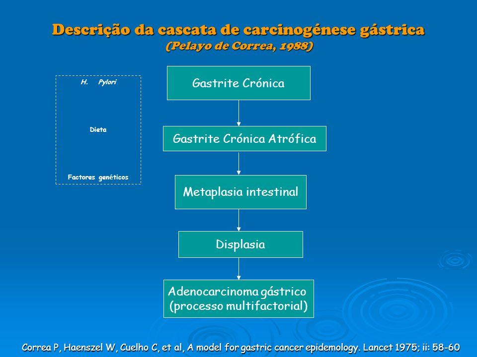 Descrição da cascata de carcinogénese gástrica (Pelayo de Correa, 1988)