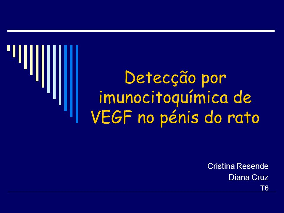 Detecção por imunocitoquímica de VEGF no pénis do rato