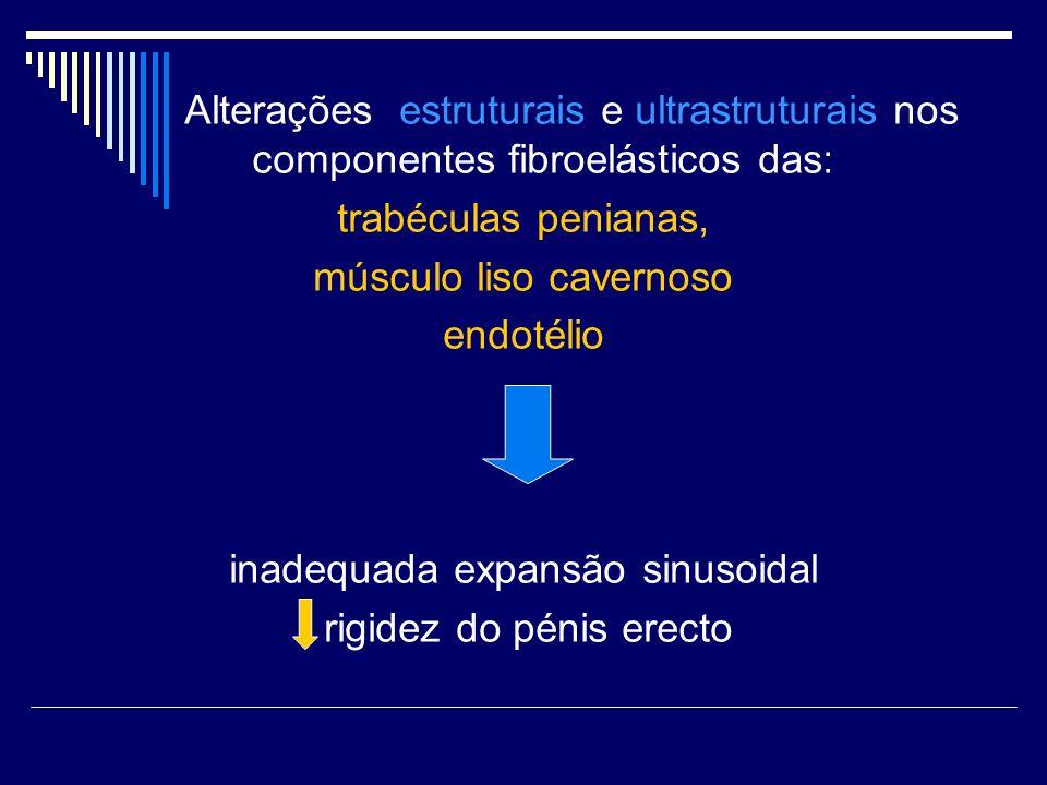 músculo liso cavernoso endotélio