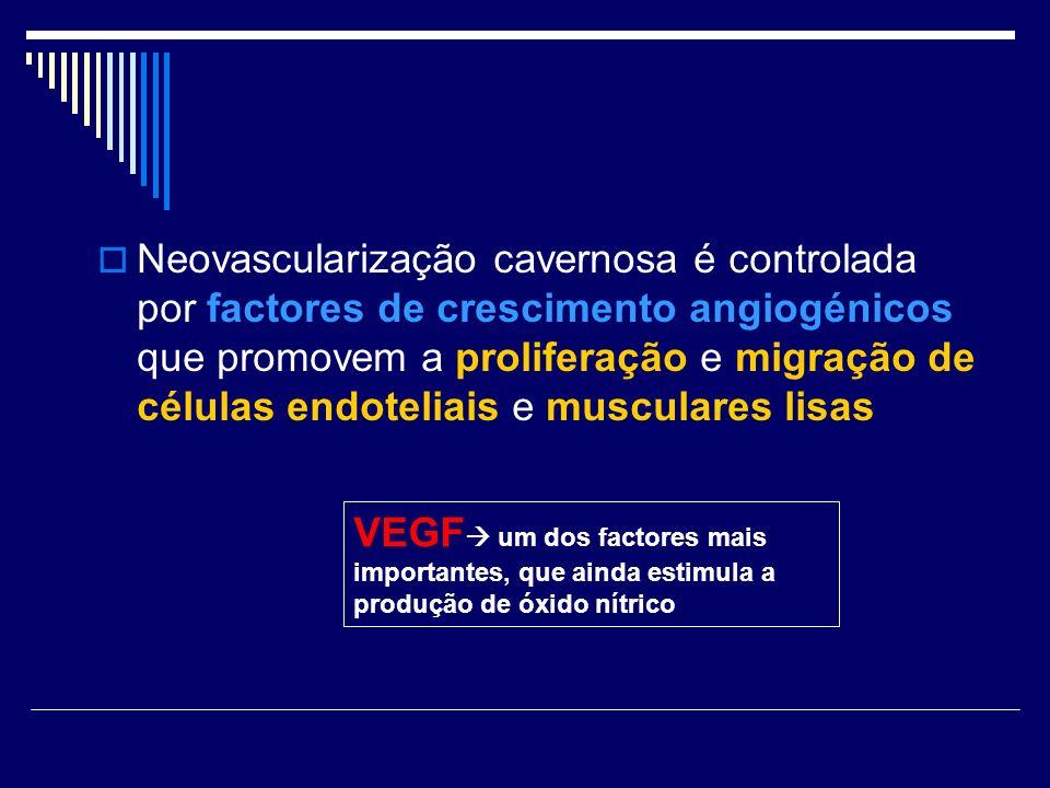 Neovascularização cavernosa é controlada por factores de crescimento angiogénicos que promovem a proliferação e migração de células endoteliais e musculares lisas