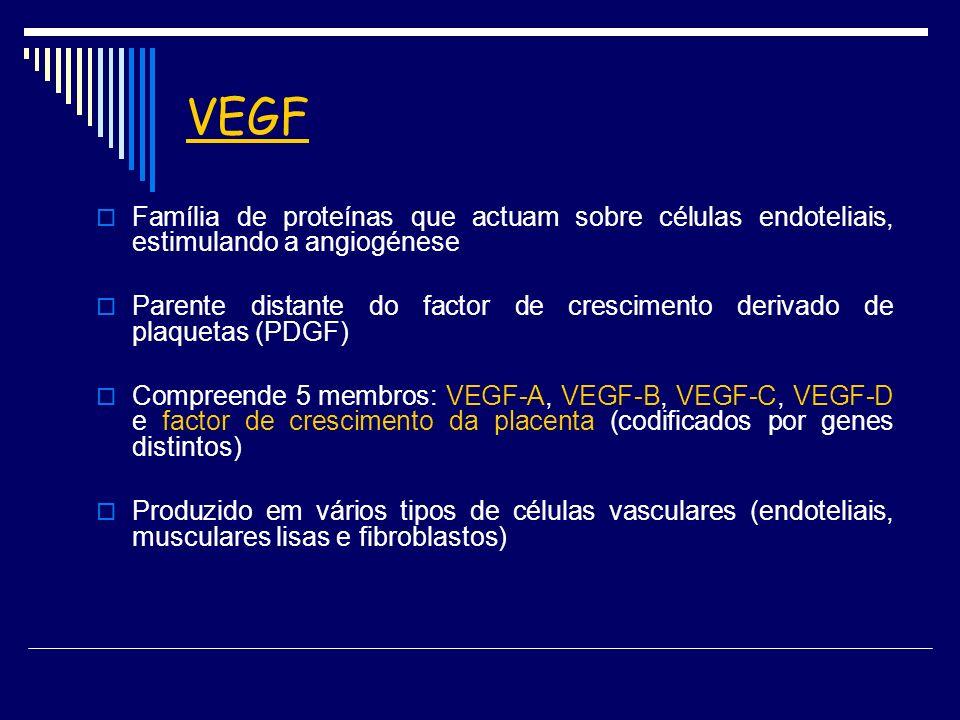 VEGF Família de proteínas que actuam sobre células endoteliais, estimulando a angiogénese.