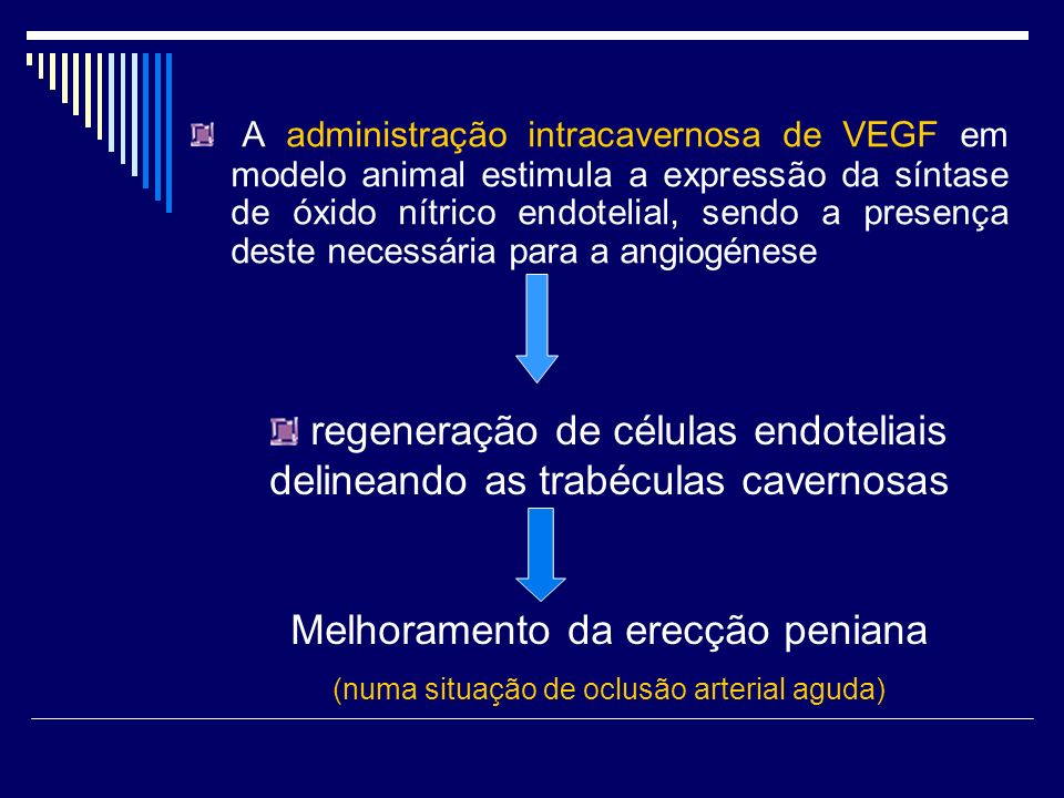 regeneração de células endoteliais delineando as trabéculas cavernosas