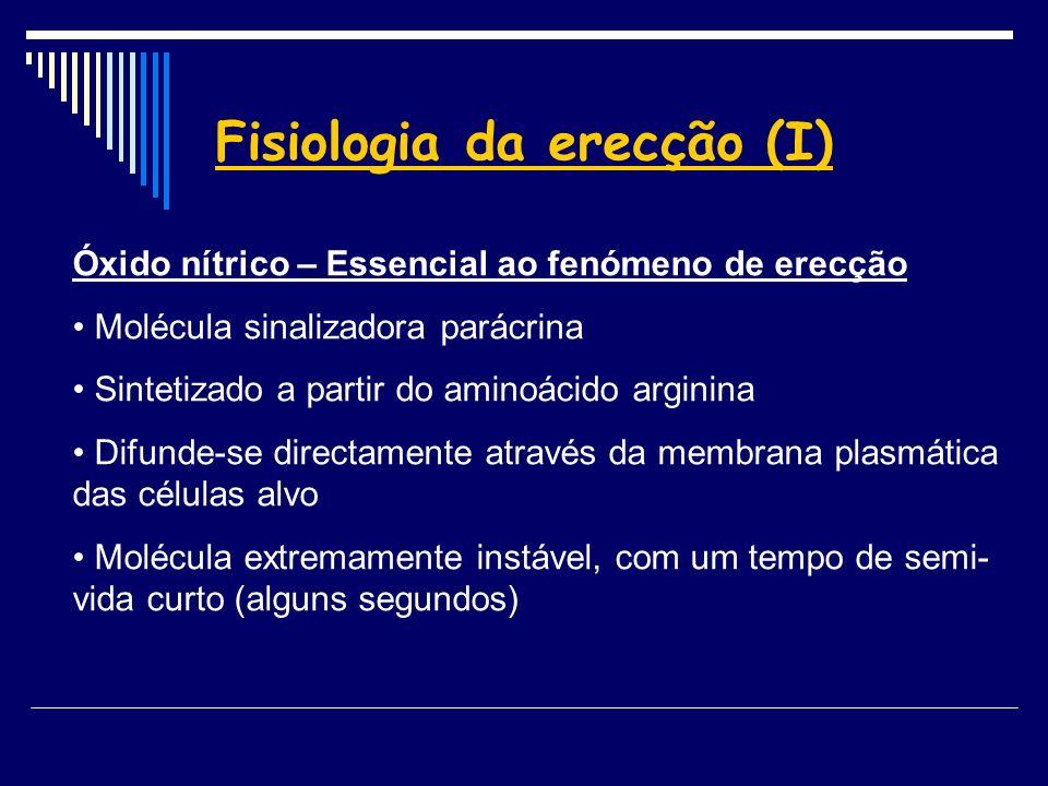 Fisiologia da erecção (I)