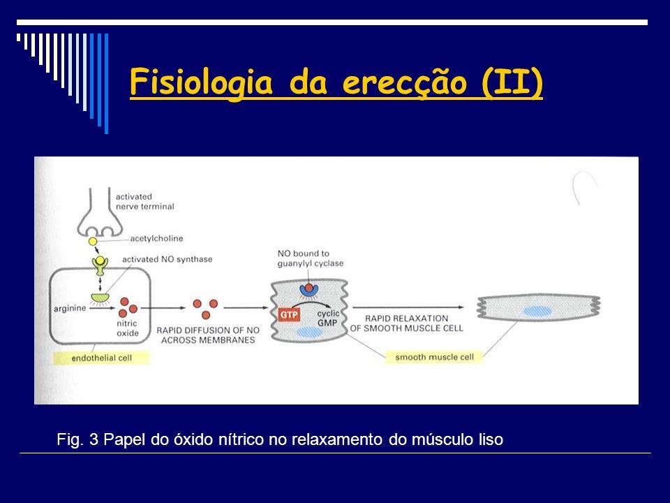 Fisiologia da erecção (II)