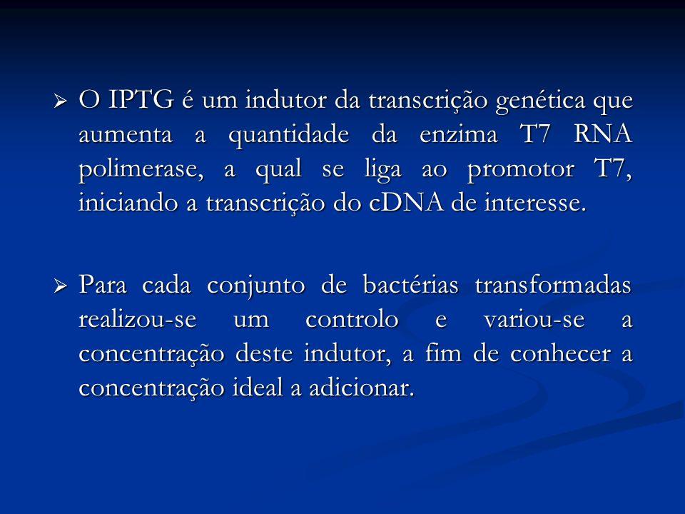O IPTG é um indutor da transcrição genética que aumenta a quantidade da enzima T7 RNA polimerase, a qual se liga ao promotor T7, iniciando a transcrição do cDNA de interesse.