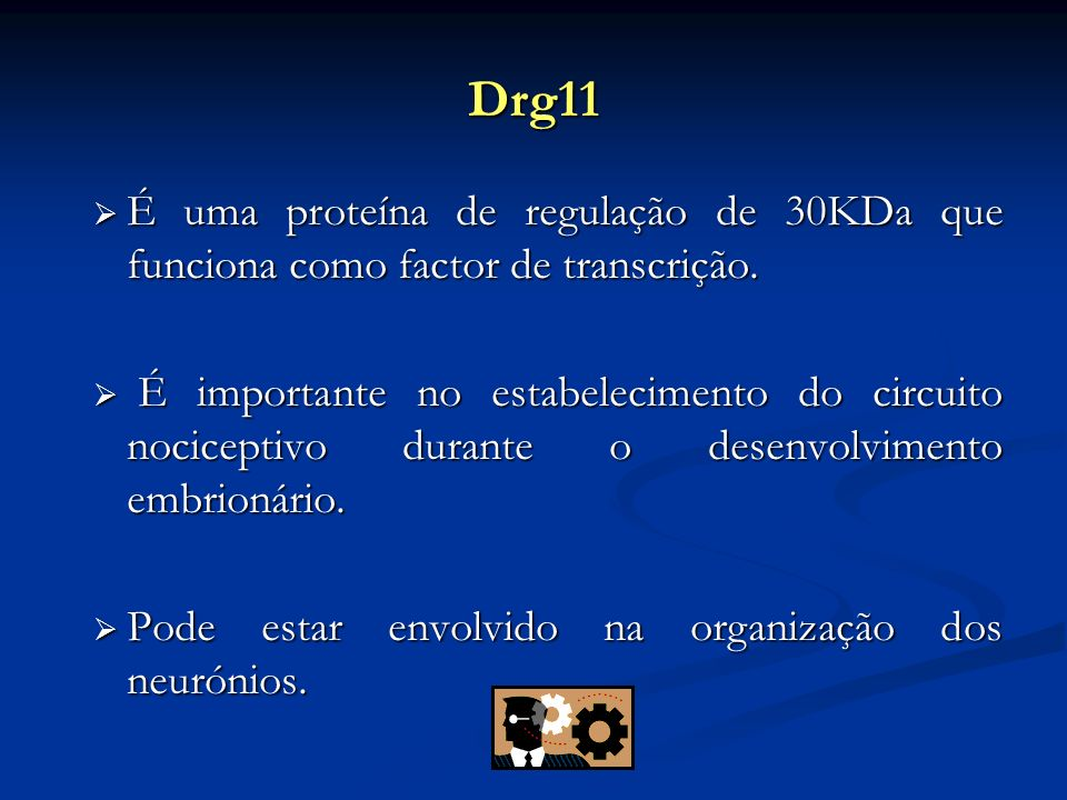 Drg11 É uma proteína de regulação de 30KDa que funciona como factor de transcrição.