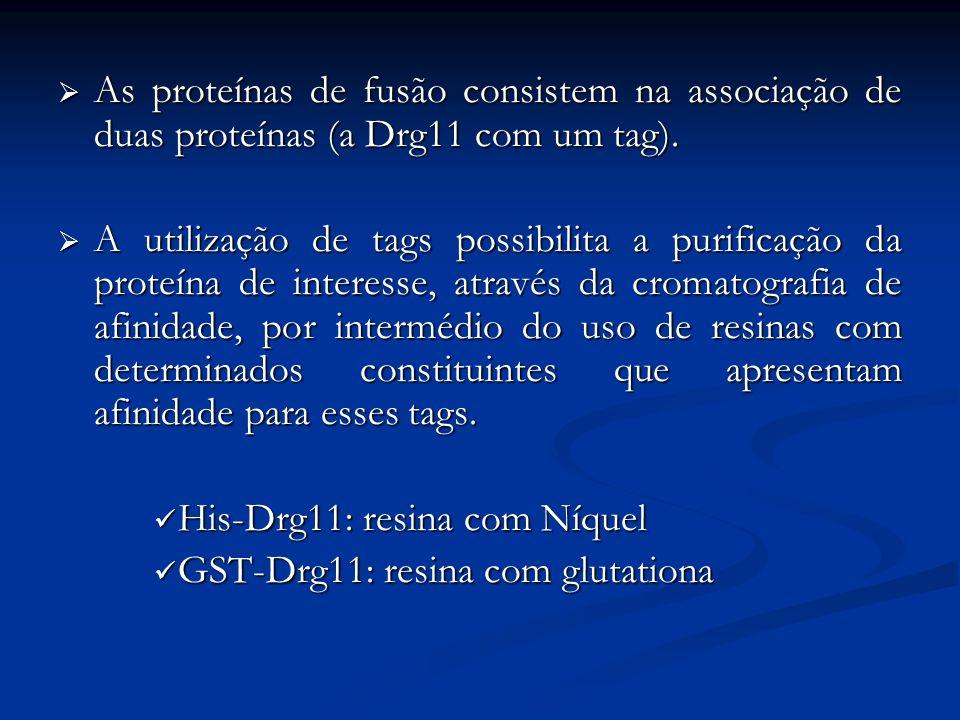 As proteínas de fusão consistem na associação de duas proteínas (a Drg11 com um tag).