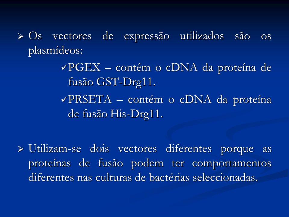 Os vectores de expressão utilizados são os plasmídeos: