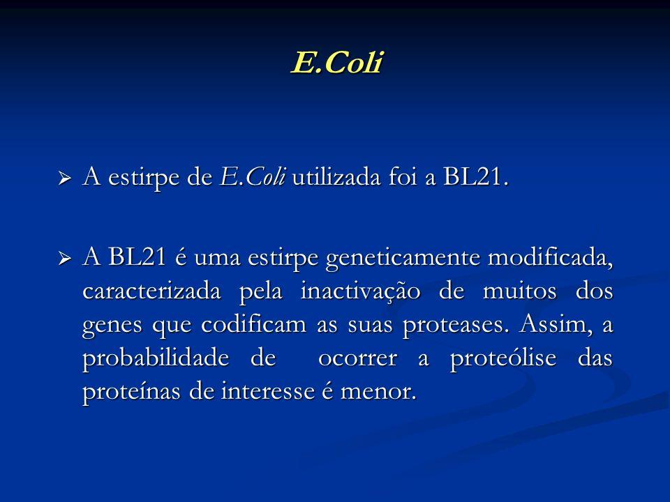 E.Coli A estirpe de E.Coli utilizada foi a BL21.
