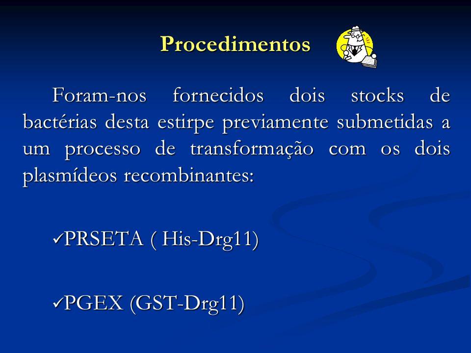 Procedimentos PRSETA ( His-Drg11) PGEX (GST-Drg11)