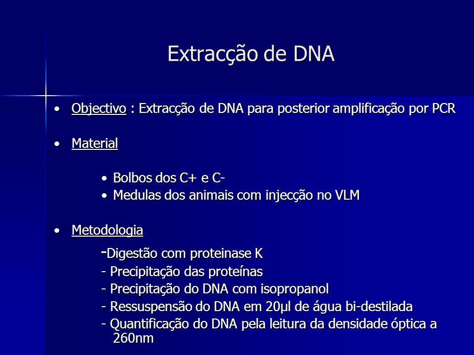Extracção de DNA -Digestão com proteinase K