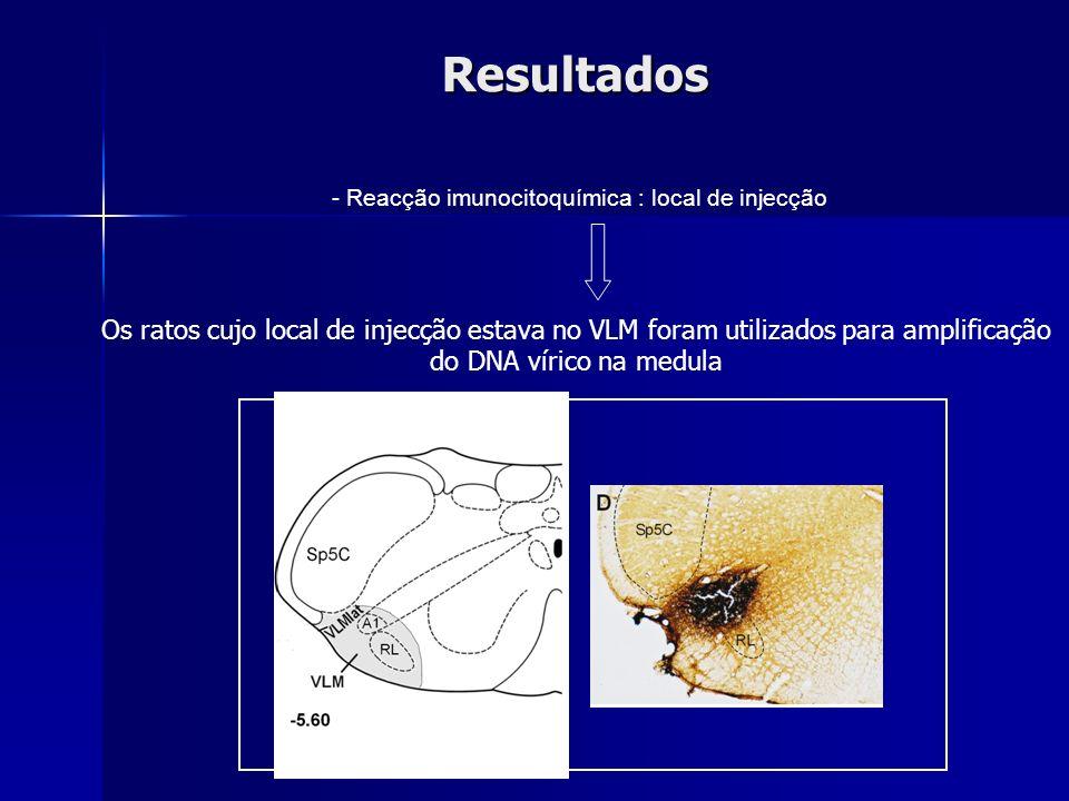- Reacção imunocitoquímica : local de injecção