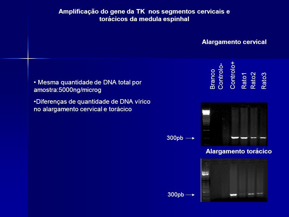 Mesma quantidade de DNA total por amostra:5000ng/microg