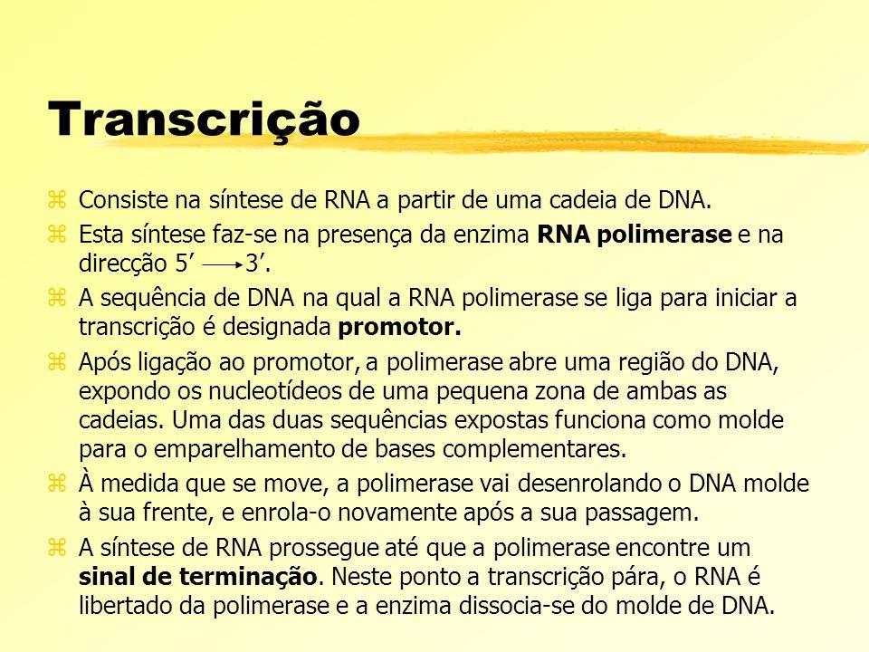Transcrição Consiste na síntese de RNA a partir de uma cadeia de DNA.