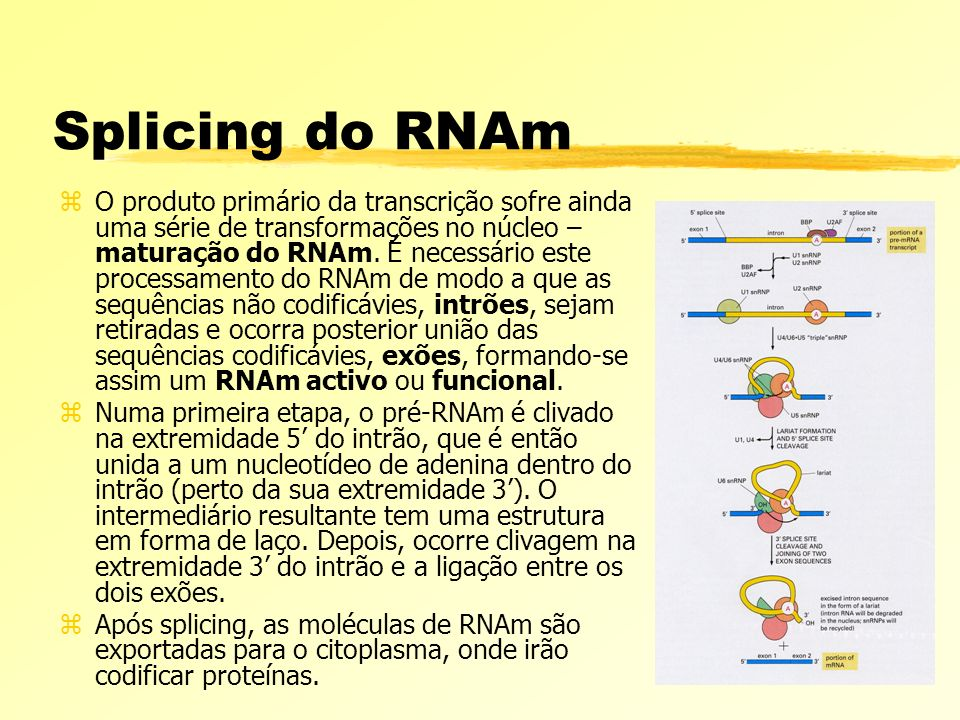 Splicing do RNAm
