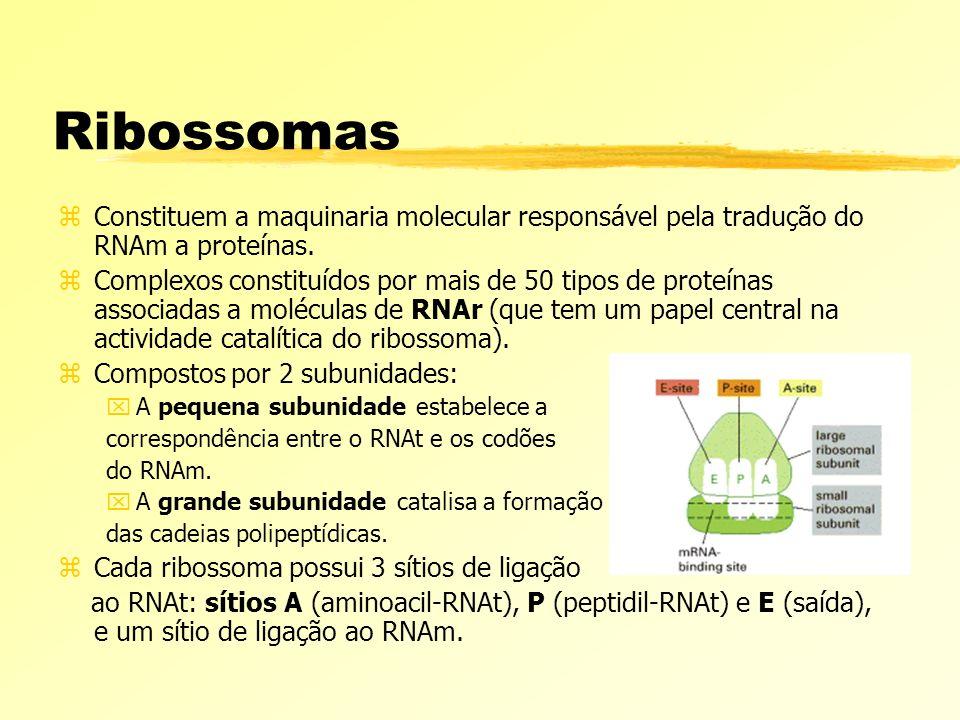 Ribossomas Constituem a maquinaria molecular responsável pela tradução do RNAm a proteínas.