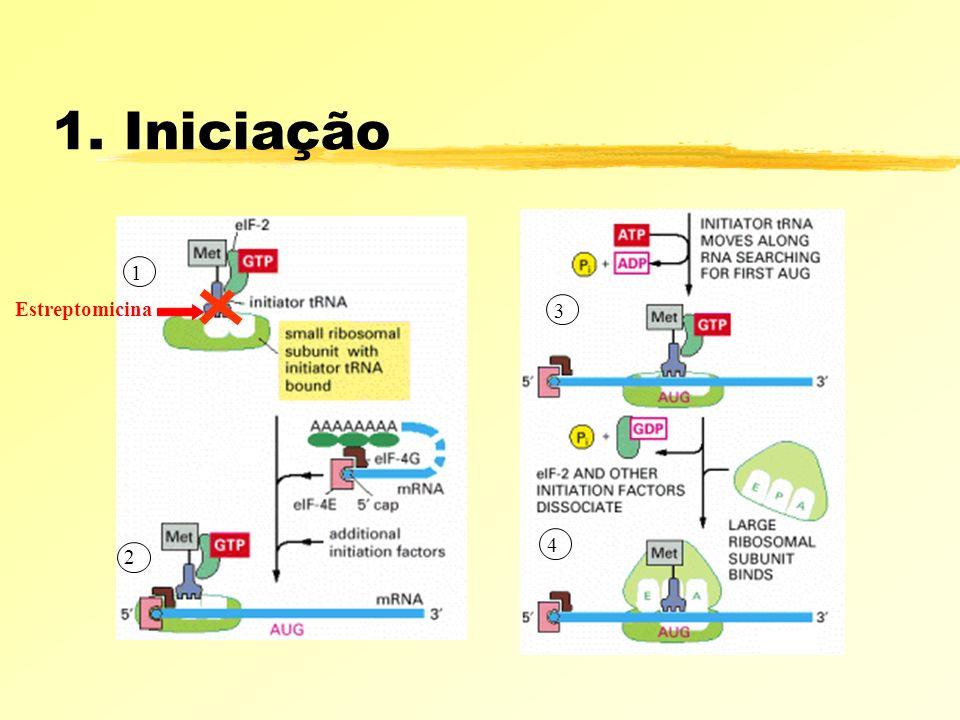 1. Iniciação 1 Estreptomicina 3 4 2