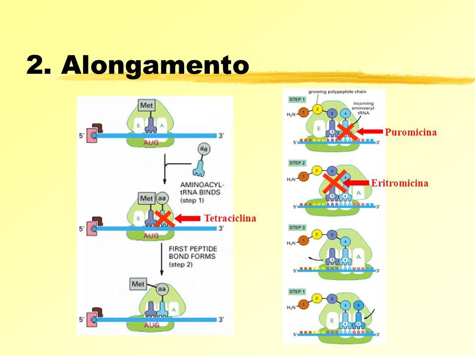2. Alongamento Puromicina Eritromicina Tetraciclina